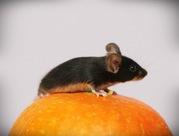 Сатиновые декоративные мышки
